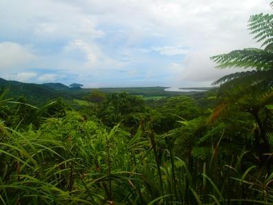 Utsikt over regnskogen